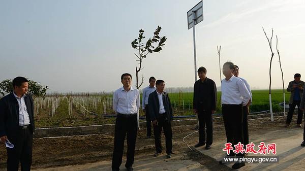 平舆县领导张怀德、赵峰等就创建国家森林城市工作进行现场办公