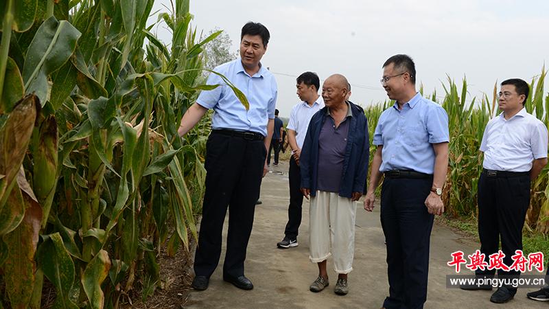 国家统计局驻马店调查队队长吕少卫 一行到平舆就玉米长势及预产情况进行调研